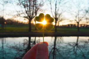 Four-leaf clover with a sunset behind it.